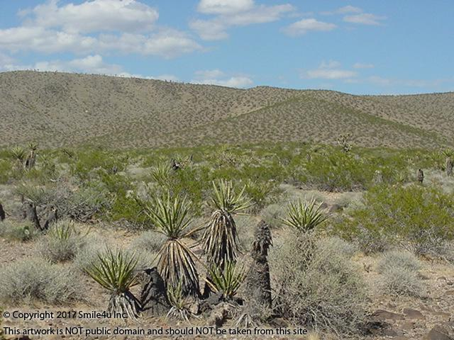 <B>1 acre of gorgeous desert property covered in a large variety of desert cactus sitting in the foothills of the White Hills overlooking the town of  Dolan Springs, Arizona. It