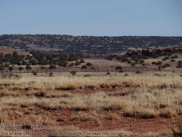 104 Acre Land For Sale In Concho AZ