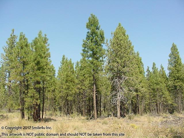 <B>Tall pine trees cover both of the 5 acre adjoining lots in Beatty, Oregon! They sit about 1/2 mile away from the 2.3 Million Acre Winema National Forest. There