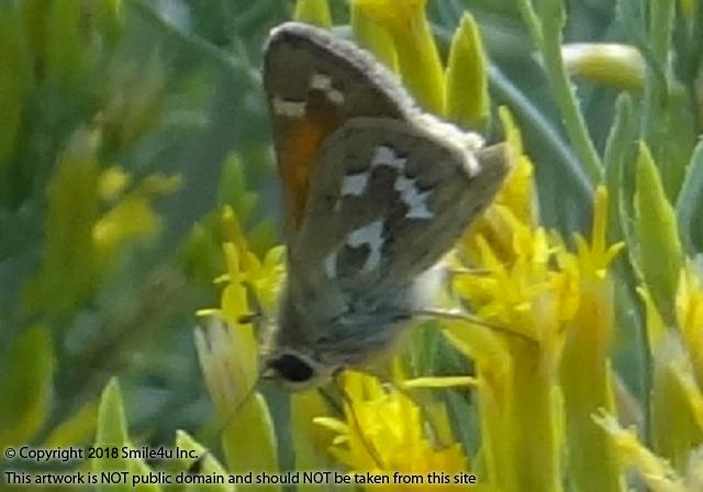<B>A pretty butterfly mingled in the yellow flowers blooming along the road! This 2 adjoining lots sit on the corner of graveled Oregon Pines Road, the main drag, so easy access to these properties!