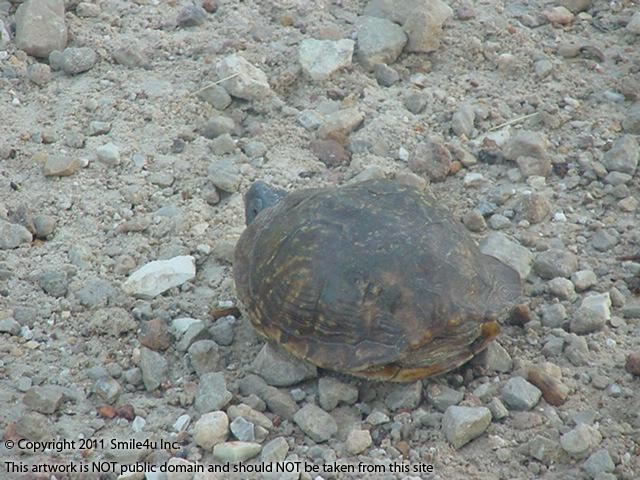 373229_watermarked_pic 012.jpg