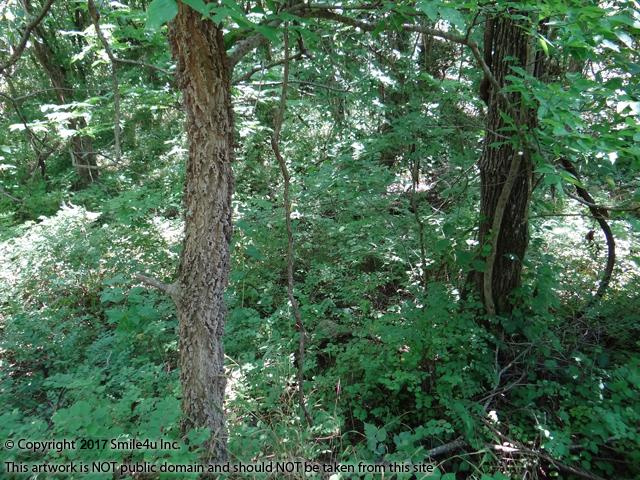 <B>The trees and vegetation are so thick its hard to see the trees thru the forest!  The lot sits at the end of an overgrown culdesac with an intermittent stream and a small trail thru the property. We sure thought it was a pretty lot with nice homes in the area!