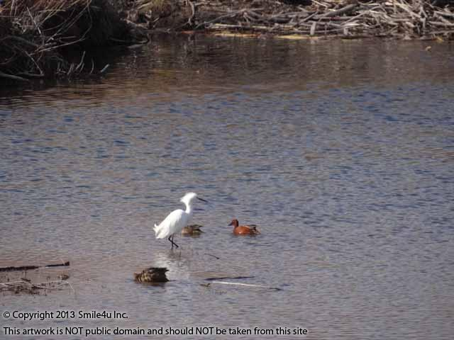 505505_watermarked_pic 014.jpg
