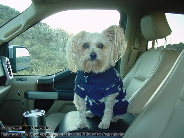 <B>My boyfriend Buddy, aka the Smile4u Mascot, sporting his new sweater in San Luis, Colorado! Brr it sure was a cold and windy day but this brave man never tells me no when I ask him if he wants to go explore land! He will be 13 years old in June. Be still my heart <3