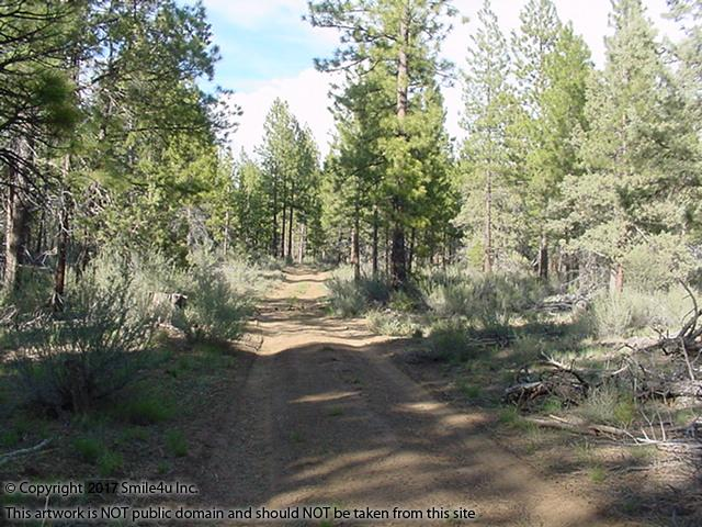 <B>The road that goes thru the property in Sprague River, Oregon. It