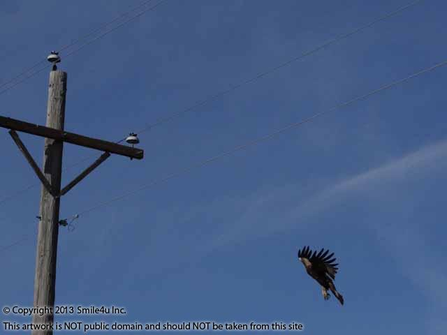 603201_watermarked_pic 370.jpg
