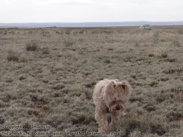 <B>My boyfriend Buddy helping me explore land in the Valley of Estancia Ranchettes Unit 9  in Moriarty, New Mexico in April 2017! Across the other side of the valley are the Manzano Mountains! He was born in June, 2005 so happy 12th birthday to Buddy! He