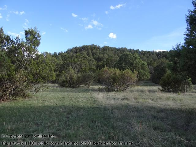 <B>Looking across the property towards the big hill that sits to the south. It