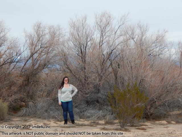 <B>Amber in front of Charleston Road on this 2.5 acres of land for sale in Pahrump Valley, California on the NV/CA state line. Wow those tall mesquite trees are beautiful and they sure gave the property lots of privacy! Charleston View is about 1 hour W of Las Vegas, Nevada in Inyo County.