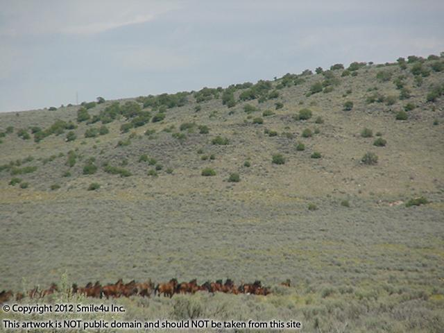 803591_watermarked_horseswildhorsemesa.jpg