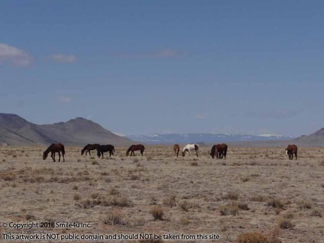 <B>Wild horses grazing down the road from 5 acres of land for sale in San Luis, Colorado! This is a rural undeveloped area and I frequently see wild horses when exploring this part of the valley. It
