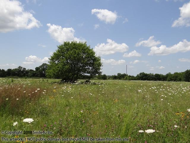 <B>It was a very pretty country side setting with wildflowers blooming in the open meadow tall grass. There