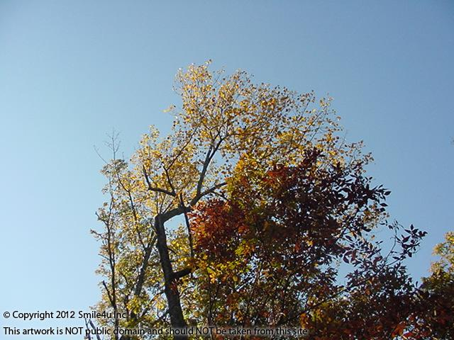 937020_watermarked_pic 117.jpg