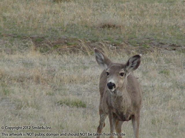 973028_watermarked_pic 504.jpg